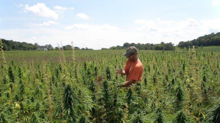 texas hemp farmer
