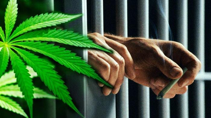 jail leaf