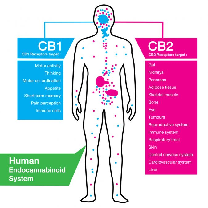 Four Types of Cannabinoid Receptors For Killing Pain and