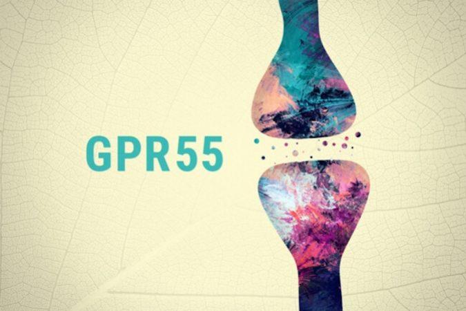 gp2222