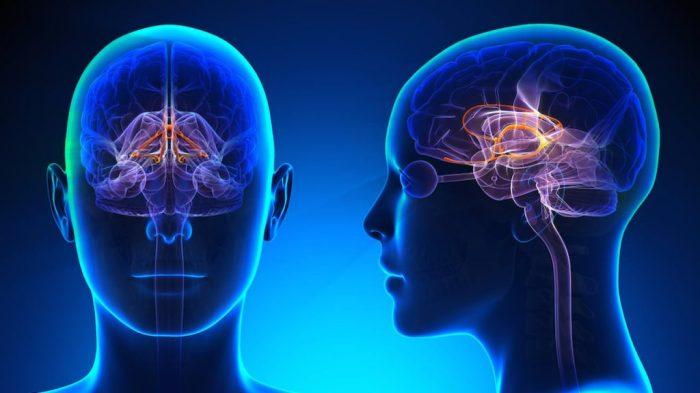 brain-1024x576
